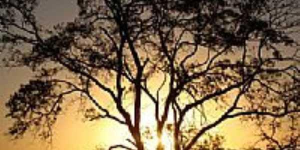 Árvore do Cerrado pôr do Sol-Foto:augusto_mario
