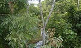 São Miguel do Araguaia - São Miguel do Araguaia-GO-Córrego entre as matas-Foto:Virley Silva GMM