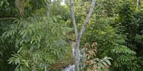 São Miguel do Araguaia-GO-Córrego entre as matas-Foto:Virley Silva GMM