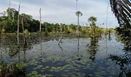 Itapiranga - Itapiranga-AM-Igarapé de águas negras-Foto:Bruno Rocha