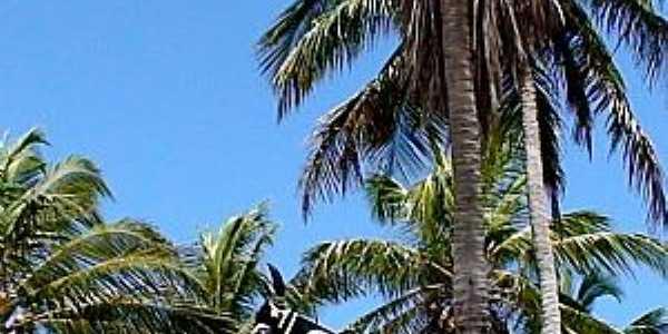 �gua Doce do Maranh�o-MA-Boi Mimoso-Foto:emidio augusto