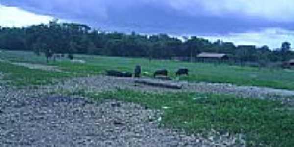 Área rural de Santa Maria em Barão de Grajaú-MA-Foto:PEDRO PAULO