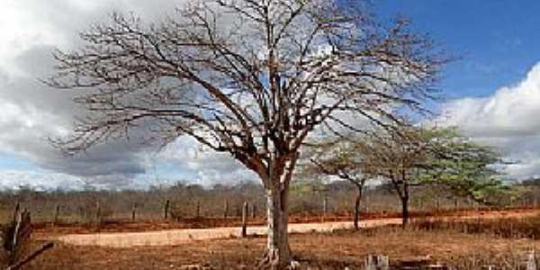 Alazão-AL-Interior do Povoado-Foto:varzeacidade.blogspot.com.br