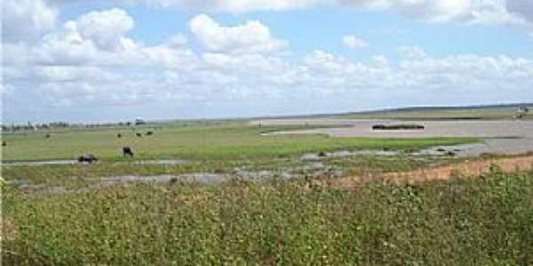 Bequimão - Pantanal Maranhense - por edson abreu