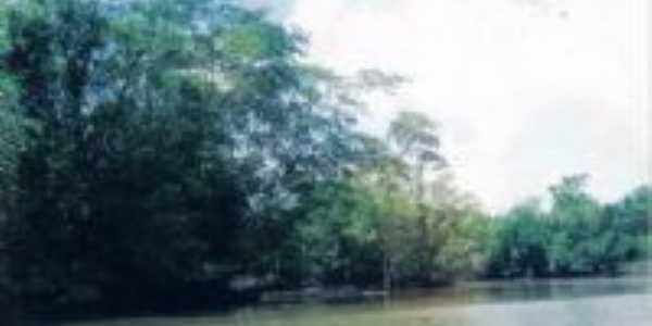 Rio Serrano. Floresta, Por alex andre