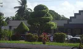 Bom Jardim - Bom Jardim-MA-Arte em árvores-autor desconhecido-Foto:Adalto Araújo