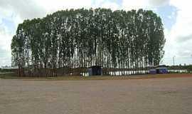 Bom Jardim - Bom Jardim-MA-Eucalíptos na beira do lago-Foto:Adalto Araújo