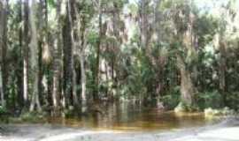 C�ndido Mendes - rio do cajual, Por adriana azevedo