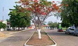 Carolina - Carolina-MA-Flamboyant florido em frente � Igreja Batista-Foto:Nando Cunha