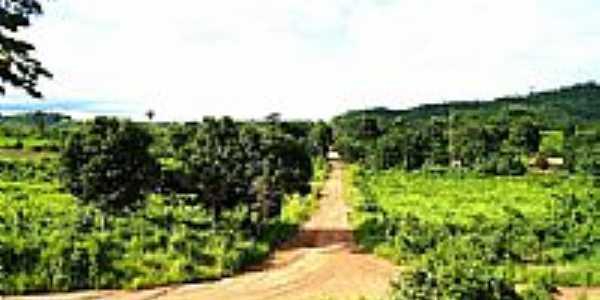 Estrada de acesso � Rodovia do arroz-Foto:JOSE WILSON