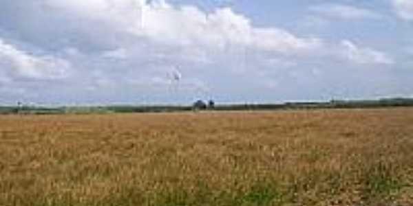 Vista a�reaVista dos campos de Godofredo Viana-Foto:maranauta.