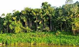 Nhamundá - Nhamundá-AM-Floresta e rio-Foto:Bruno Rocha