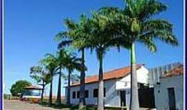 Pastos Bons - Palmeiras Imperiais na Rua da Igreja em Pastos Bons-Foto:Agamenon Pedrosa