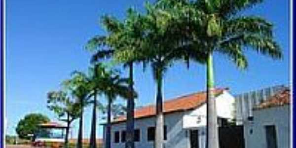 Palmeiras Imperiais na Rua da Igreja em Pastos Bons-Foto:Agamenon Pedrosa