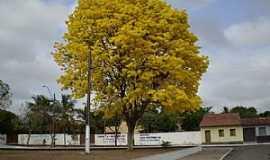 Pindaré Mirim - Pindaré-Mirim-MA-Ypê amarelo no centro-Foto:MOLECULABRASIL