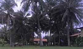 São José de Ribamar - São José do Ribamar-BA-Coqueiros na Praia do Caúra-Foto:marco vinicius