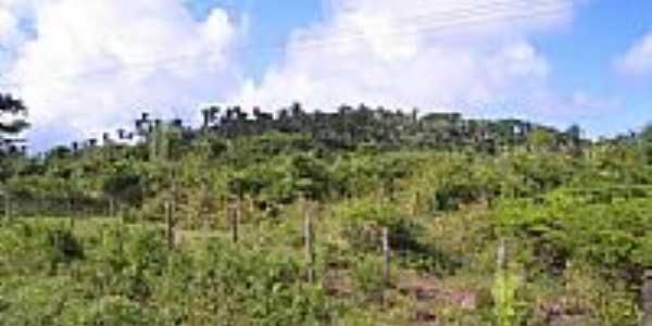 Morro dos Côcos em São Mateus do Maranhão, por Valdemir Ervin Rosales.
