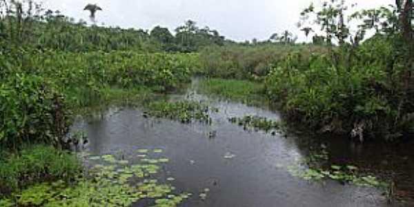 Serrano do Maranhão-MA-Igarapé-Foto:Jonhson Meiro Rodrigues