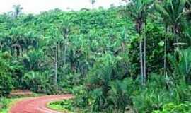 Sucupira do Riachão - Babaçual-Foto:Agamenon Pedrosa