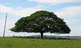 Abaeté - Abaeté-MG-Árvore Copaíba-Foto:Joao Robson