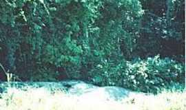 Água Viva - Água Viva-MG-Paisagem da região-Foto:Luiz Hisse