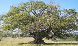 Aguanil - Aguanil-MG-Linda árvore no campo-Foto:chokito.jam