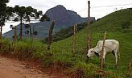 Aiuruoca - O Pico e o zebu,�rea rural em Aiuruoca-Foto:Tiago Cavalcante