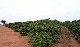 Araguari - Araguari-MG-Cafezal-Foto:Parruco
