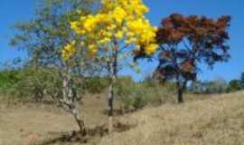 Arantina - ipe amarelo, Por PC