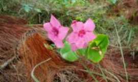 Arantina - flor do campo /arantina MG, Por PC