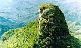 Araponga - pico do boné