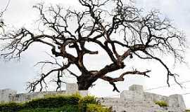 Araxá - Araxá-MG-Árvore dos Enforcados-Foto:jfrezende