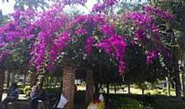 Araxá - Araxá-MG-Primavera na Praça Governador Valadares-Foto:jfrezende
