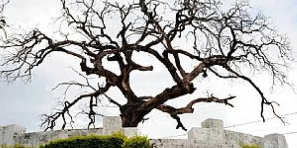 Araxá-MG-Árvore dos Enforcados-Foto:jfrezende