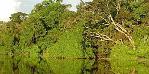 Tapau�-AM-Rio Abufari-Foto:leslie tavares