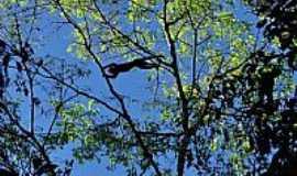 Tefé - Macaco salta sobre nós durante passeio de canoa na floresta alagada na Reserva do Mamirauá em Tefé-AM-Foto:Rodrigo