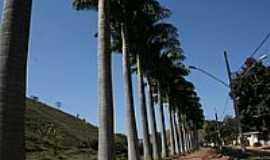Barra Longa - Palmeiras beira rio-Foto:Geraldo Salomão