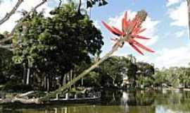 Belo Horizonte - Belo Horizonte-MG-Uma flor junto ao Lago do Parque Municipal-Foto:Paulo Yuji Takarada