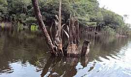 Urucurituba - Urucurituba-AM-Ilha Igapó-Foto:James Martins
