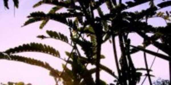 Pôr do Sol no Cerrado Bonfinopolitano  com vista à silhueta de uma Xilópia., Por Poeta Nunes de Souza