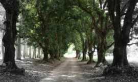 Buenópolis - avenida das mangueiras, Por Marcelo Washington