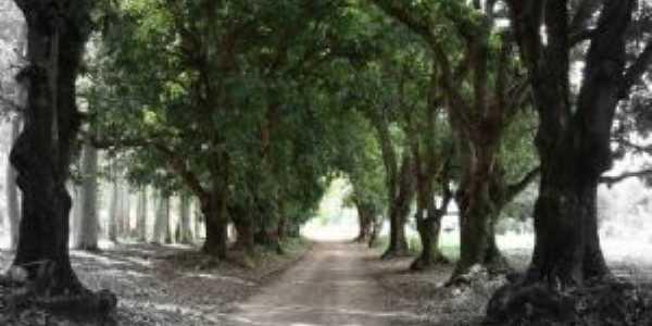 avenida das mangueiras, Por Marcelo Washington