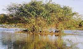 Caçarema - Caçarema-MG-Ilha na Lagoa Bom Sucesso-Foto:aquiondeeumoro.