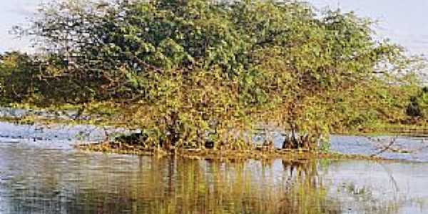 Caçarema-MG-Ilha na Lagoa Bom Sucesso-Foto:aquiondeeumoro.
