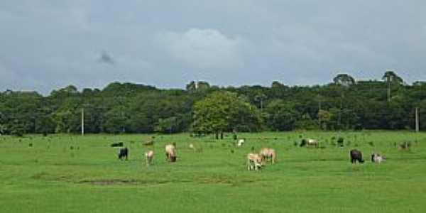 Aporema-AP-Campo de pastagem na Fazenda Modelo-Foto:Alan Kardec