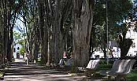 Campo Belo - Corredor de árvores na Praça Cônego Ulisses em Campo Belo-MG-Foto:Edu Lacerda