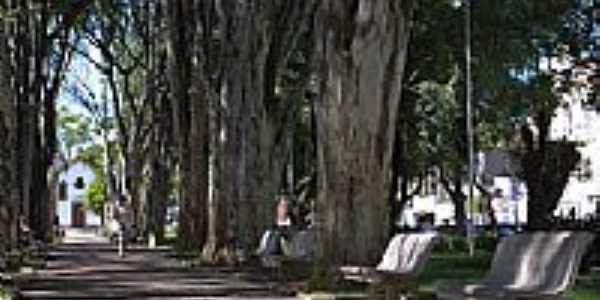 Corredor de árvores na Praça Cônego Ulisses em Campo Belo-MG-Foto:Edu Lacerda