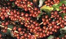Capelinha - Cultura cafeeira