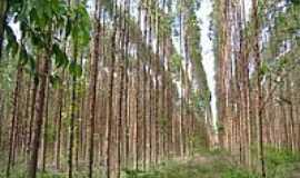 Capelinha - Plantação de Eucalíptos-Foto:Gildazio Fernandes [Panoramio]