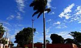 Capinópolis - Capinópolis-MG-Imponente Palmeira Imperial no trevo de acesso-Foto:Carlos Alberto Alves